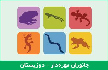 جانوران مهرهدار - دوزیستان