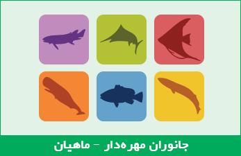 جانوران مهرهدار - ماهیان
