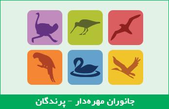جانوران مهرهدار - پرندگان
